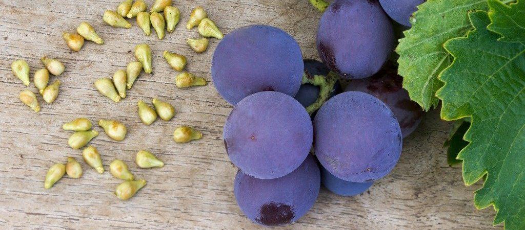 Druivenpit olie natuurlijk ingrediënt - Rio Rosa Mosqueta