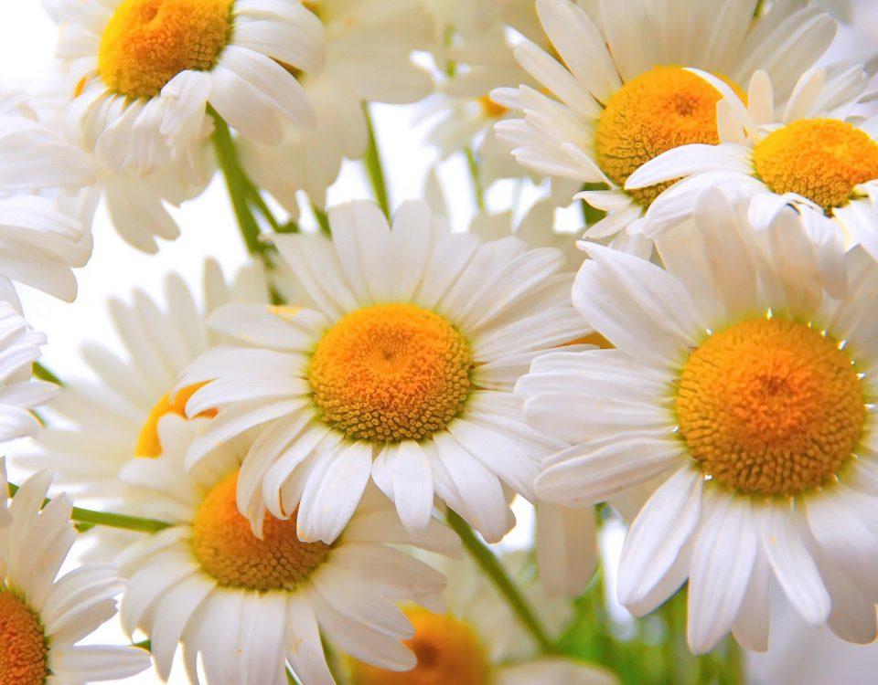 5 Lentetips voor je huid - Rio Rosa Mosqueta