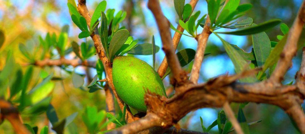 Arganolie natuurlijk ingrediënt | Rio Rosa Mosqueta