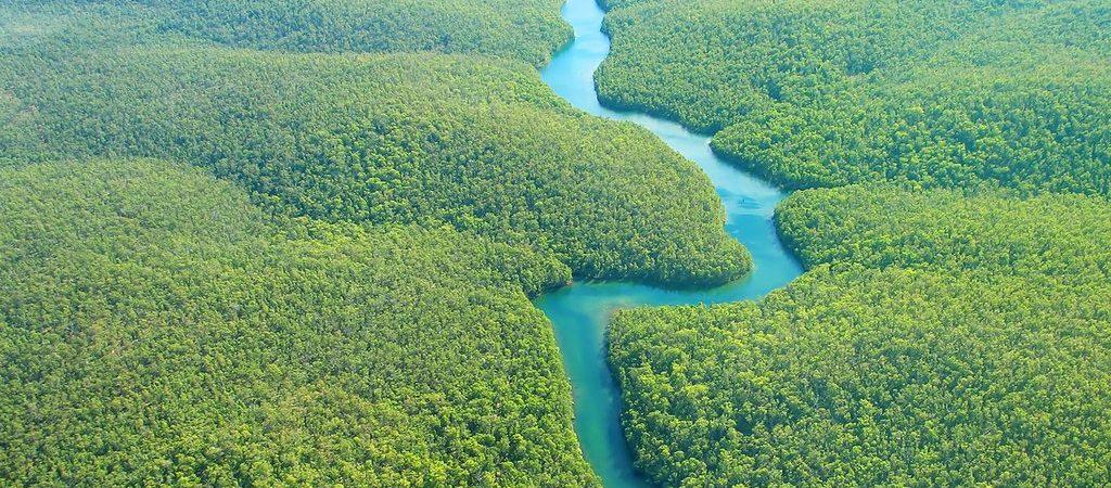 Rio Amazon, kruiden en ingrediënten uit de natuur